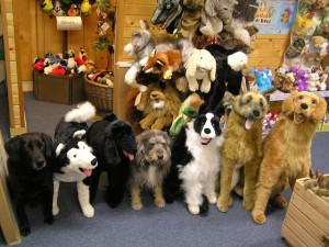 "Many of our stuffed animals look just like the real thing!  Can you pick out the two real ""store dogs"" (Cooper and Rowdy) from among this ""line-up""?"